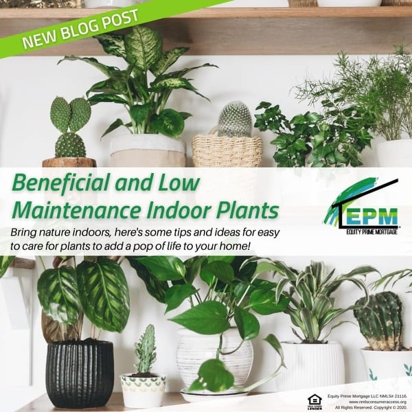 Check out these Beneficial and Low Maintenance Indoor Plants