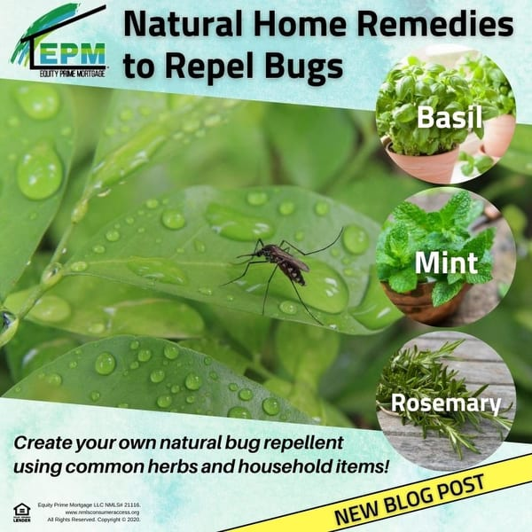 Natural Home Remedies to Repel Bugs