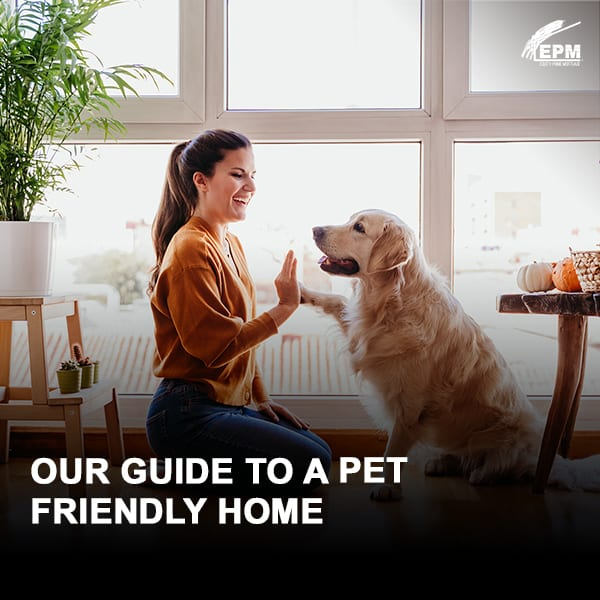 Our Guide to a Pet Friendly Home